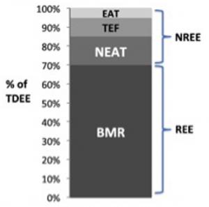 gasto calórico importancia del NEAT