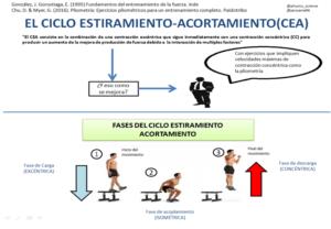 Fases del ciclo estiramiento-acortamiento durante un salto.