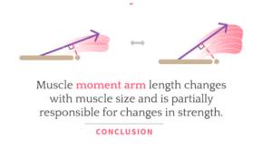 Brazo de momento e hipertrofia muscular.