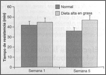 Rendimiento de carrera en ratas con dietas altas en grasa