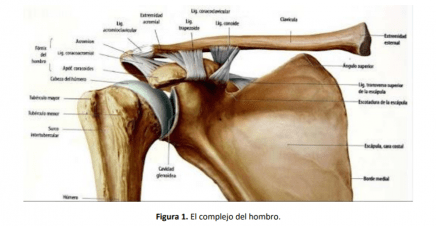 complejo del hombro